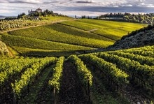 Hallgarten & Novum Wines adds Frescobaldi's first