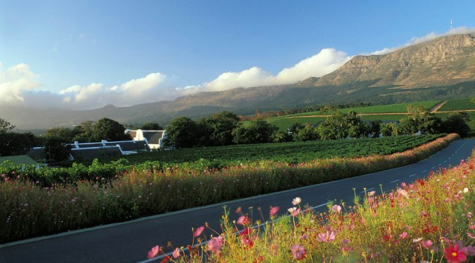 View From The Vineyard #1: Groot Constantia