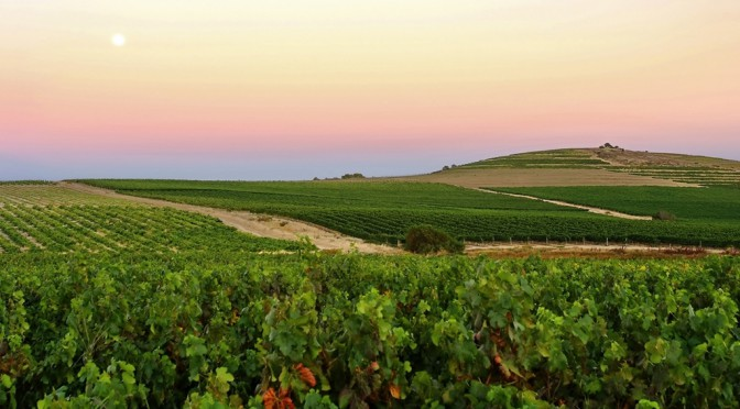 Out of Africa: The Hallgarten Buying Team Heads To South Africa In Search of New Wines – Day 1