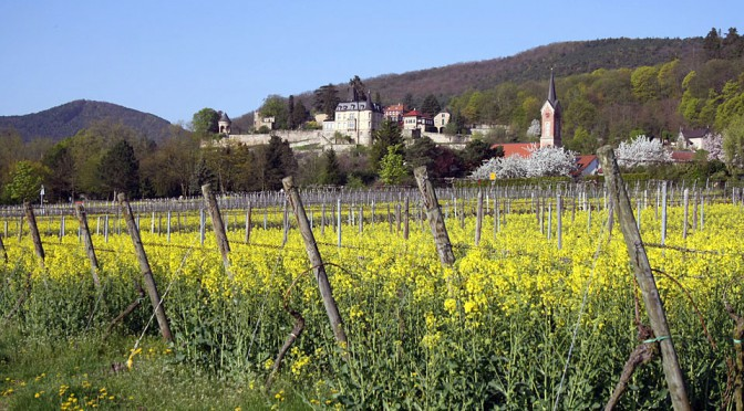 Weingut Weegmüller Named in Top 50 German Wines of 2016