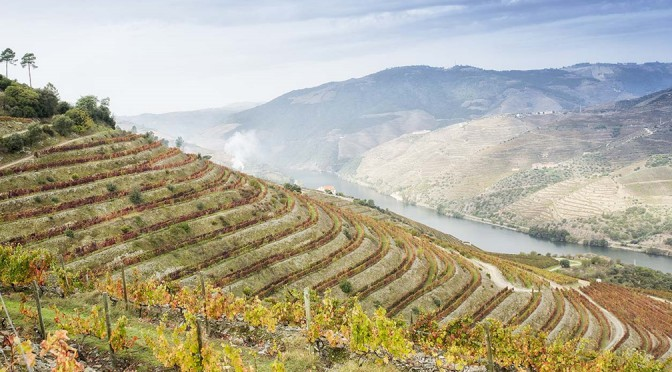 Gallery: A Visit to Barros & The Douro Valley