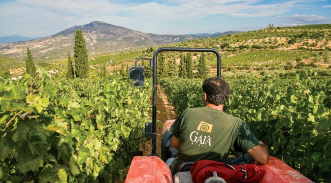 In The Papers: Greece and Gaia Wines