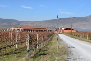 ktima-alpha-winery