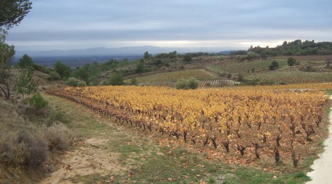 Gérard Bertrand's Challenge: Uncover new terroir through Biodynamic Winemaking