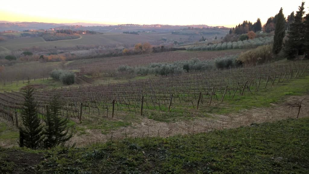 Castiglioni Vineyard