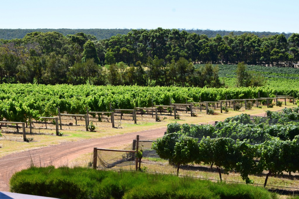 1. Wilyabrup Vineyard, Margaret River