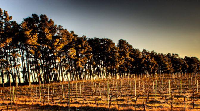 Eden Road Wines: Heaven on Earth