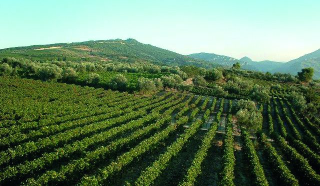 Greece's Tuscan Future