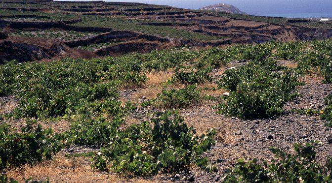 Volcanic Santorini