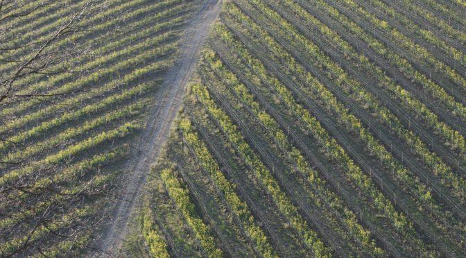 Poise, elegance, balance – a Nureyev wine