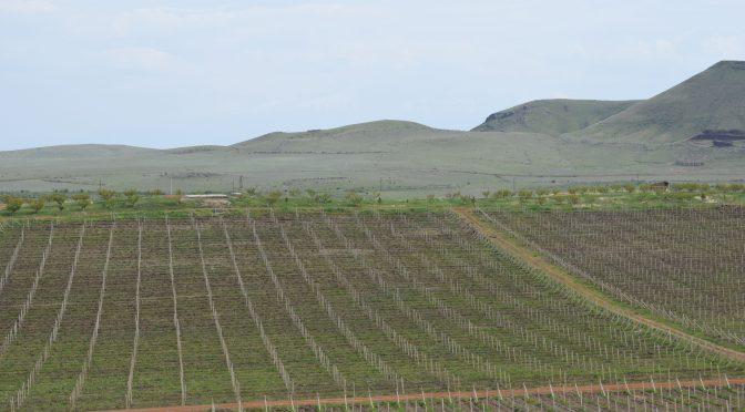Who made wine first – Armenia or Georgia?