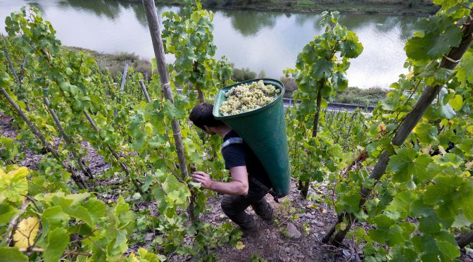 The Challenge of Winemaking